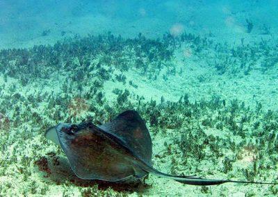 Creole-Rock-Snorkeling-St-Maarten-03