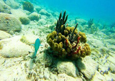 Creole-Rock-Snorkeling-St-Maarten-04
