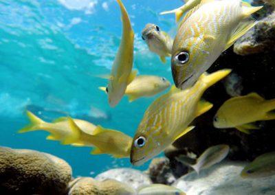 Creole-Rock-Snorkeling-St-Maarten-06